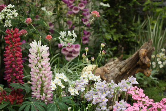 Roses & Gardening Show 2012