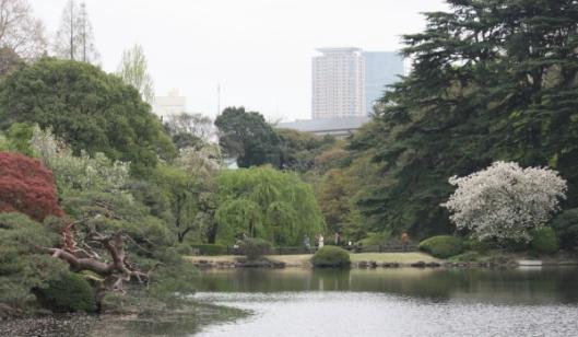 Shinjyuku Gyoen's garden