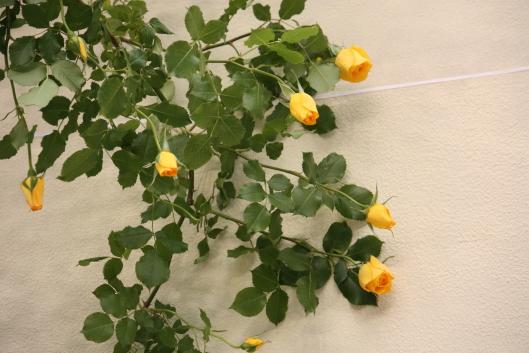 Roses & gardening show 2012, Japan