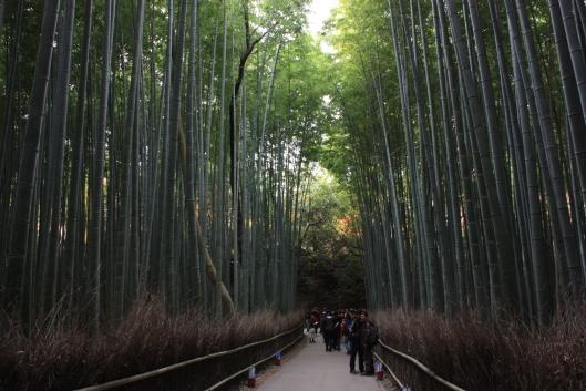Sagano, Bamboo