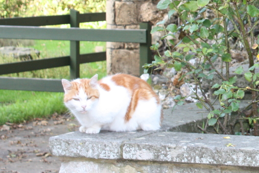 cat at Canterbury Cathedral's garden