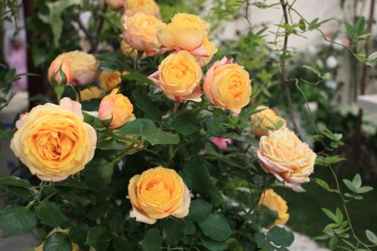15th International roses & gardening show 2013