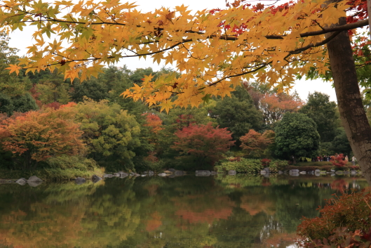 Showa kinen park, red leaves